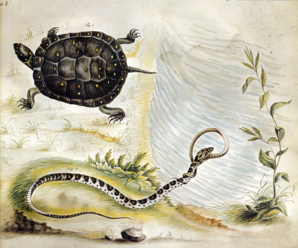 Bartram's Travels Turtle and Snake