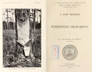 """A New Method of Turpentine Orcharding,"" 1903. Washington, D.C.: U.S. Dept. of Agriculture, Bureau of Forestry."