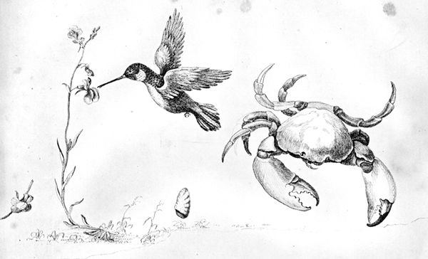 Bartram's Travels Crab and Hummingbird